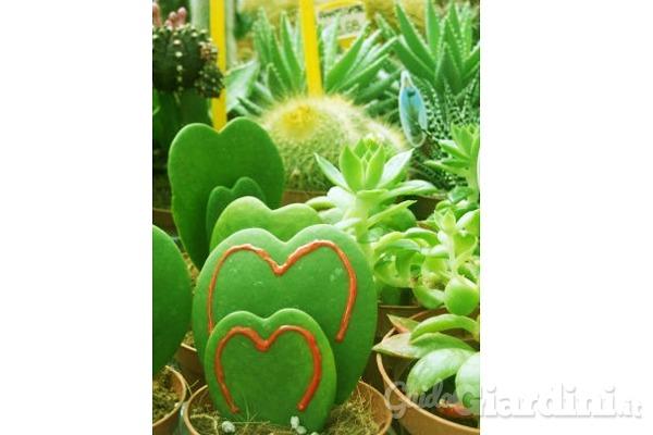 Consigli per la cura delle piante grasse for Foto piante grasse particolari
