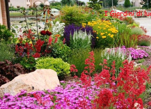 Immagini di i giardini di luca for Erbacee perenni