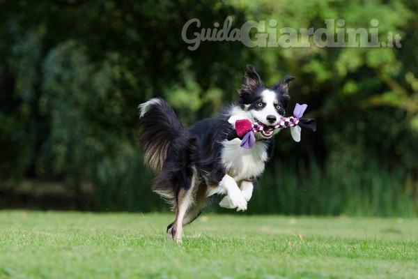 Come proteggere il tuo giardino dai cani?