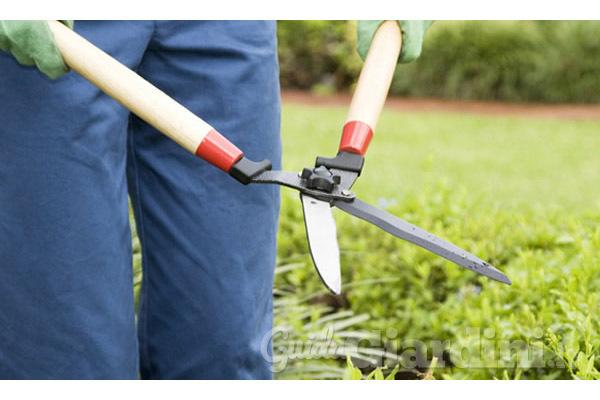 Buone pratiche di giardinaggio