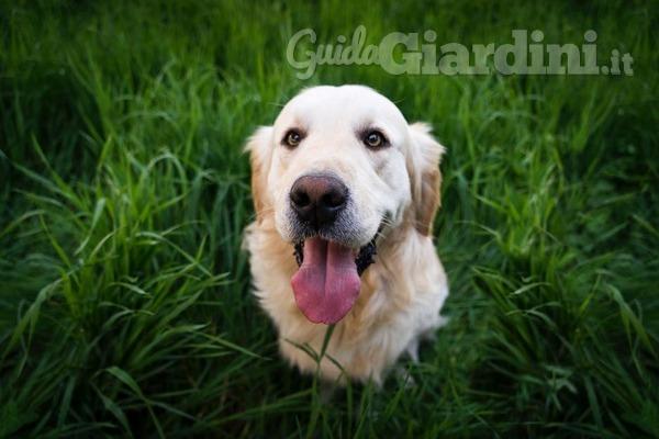 Prato, manutenzione ... e cani