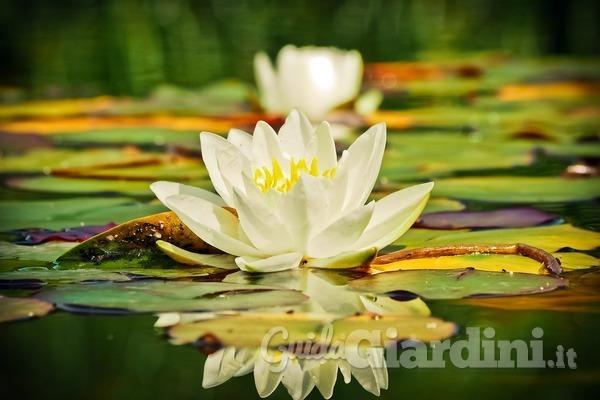 Quando acqua e piante sono in perfetta armonia