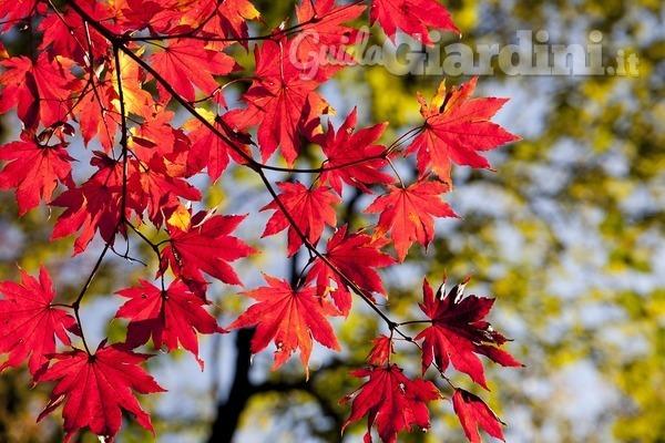 L'autunno è una seconda primavera