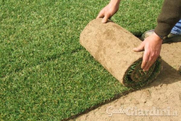 Il tappeto erboso a rotoli un prato pronto all uso for Prato zolle