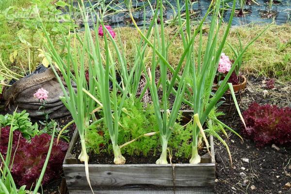 Cosa piantare a gennaio nel giardino di casa for Cosa piantare nell orto adesso