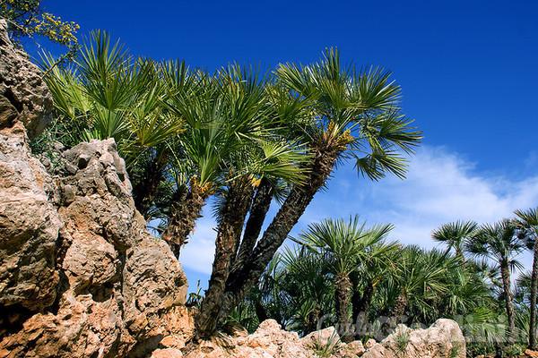 Palme cycas cocos come curare le piante esotiche for Palma pianta