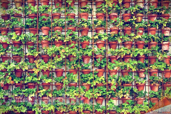 Giardini verticali e terrazze ecologiche