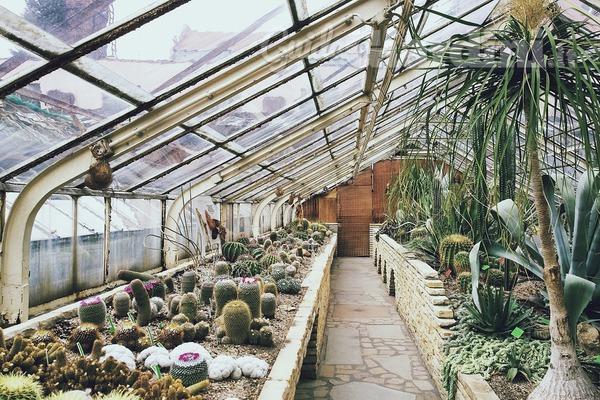 Le piante grasse pi rare da appartamento e da esterno for Piante rare