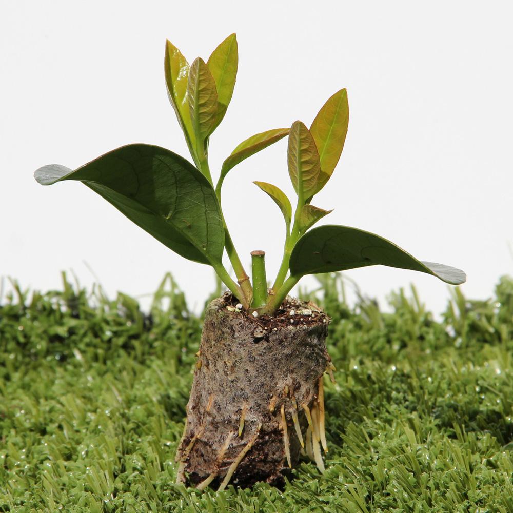 Giardino Cosa Piantare A Febbraio: Cosa Piantare A Gennaio Nel Giardino Di Casa