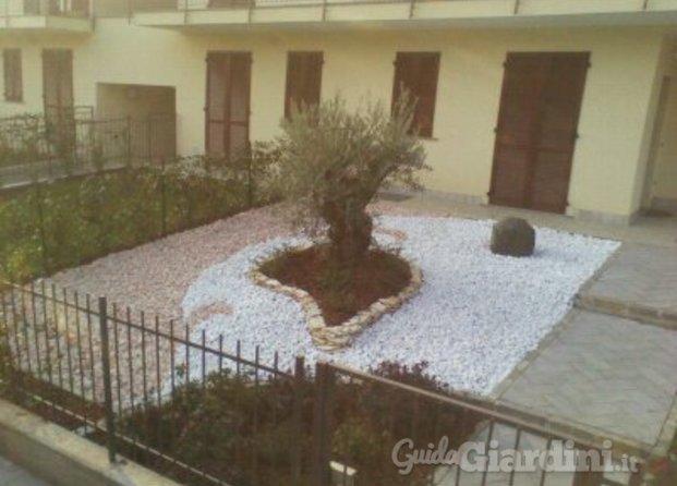 Immagini di green house di saporiti stefano for Aiuola con ulivo