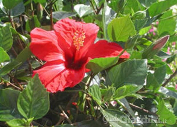 Vivai piante paradiso for Catalogo alberi da giardino