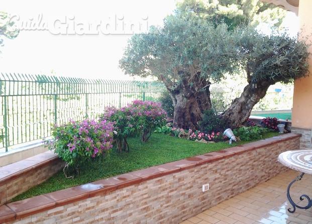 Niva garden di nicola vaino giardiniere paesagista for Aiuola con ulivo