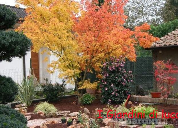 Giardino Zen Giardinieri In Affitto : I giardini di luca guidagiardini