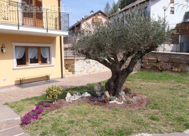 Immagini di ravanelli edj s r l - Siepe di ulivo ...