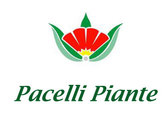 Pacelli Piante Ss