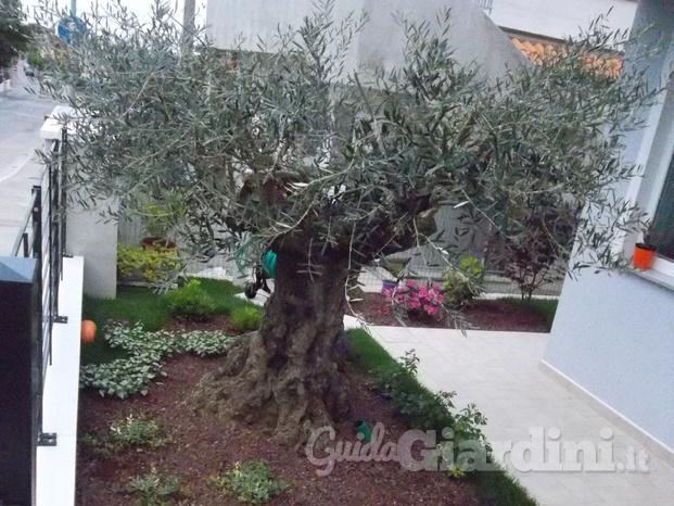 Good giardino con ulivo with giardino con ulivo - Giardino con ulivo ...