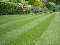 Lawn-stripey-1mg1.jpg