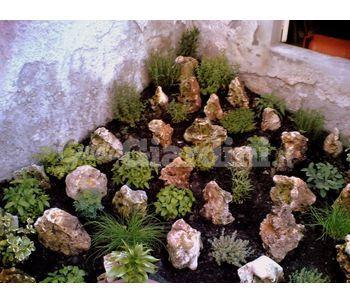 Giardini rocciosi for Piccoli giardini rocciosi
