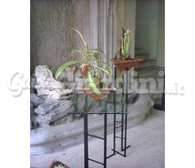 Pianta - Nepenthes X Ventrata Catalogo ~ ' ' ~ project.pro_name