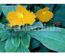 Costus Igneus Catalogo ~ ' ' ~ project.pro_name
