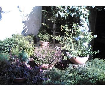 Realizzazione terrazzi balconi fioriti for Terrazzi fioriti