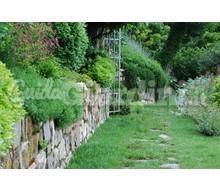 Arbusti for Progettazione giardini siena