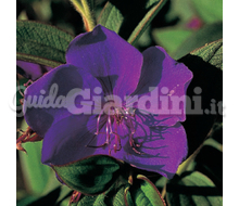 Tibouchina2 Catalogo ~ ' ' ~ project.pro_name