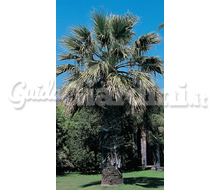 Washingtonia2 Catalogo ~ ' ' ~ project.pro_name