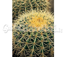Piante - Cacti  Catalogo ~ ' ' ~ project.pro_name